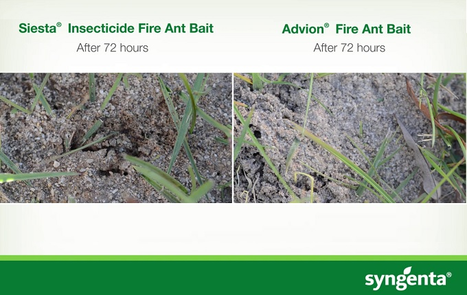 Advion Fire Ant Bait Comparison Trials.jpg